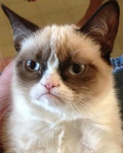 original grumpy cat
