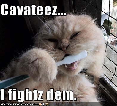 poetsen dieren ook hun tanden?