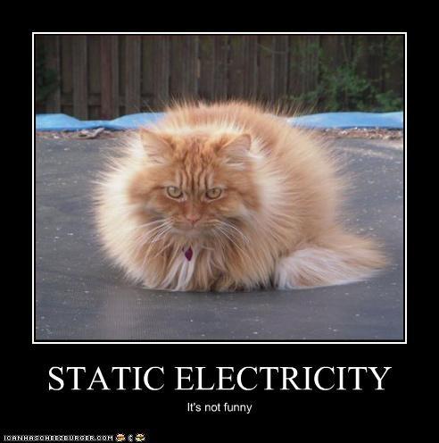 statische kat