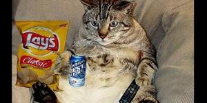 mijn tv wordt ingepalmd door de kat